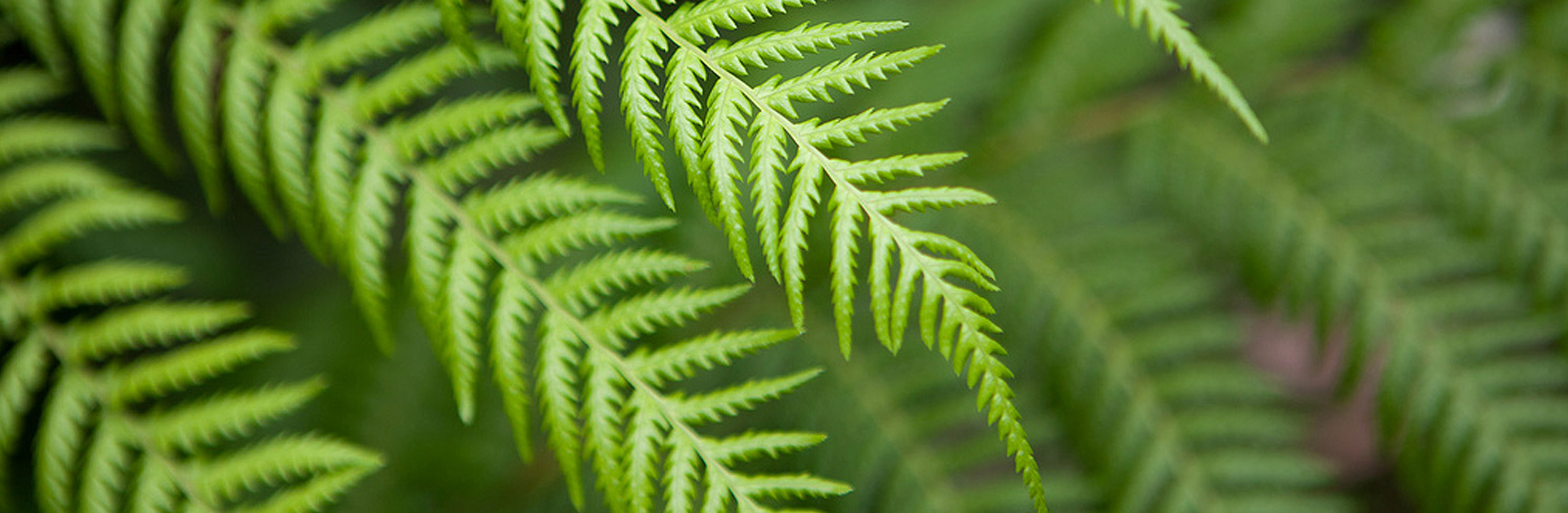 Hobart-Orofacial-Pain-and-Special-Needs-Clinic-Fern-Leaf-Slider2